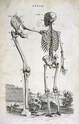 Skeleton And Giant's Leg Print by British Library