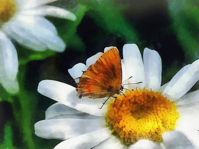 Butterfly Photograph - Skipper On A Daisy by Susan Savad