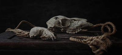 Skull Photograph - Skulls With Rope by Everet Regal