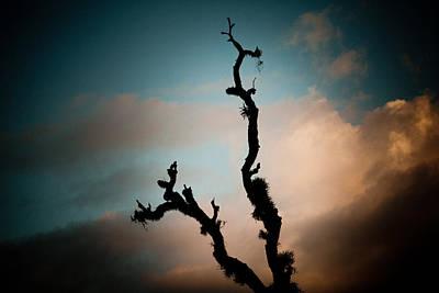 Sky And Old Tree Print by Raimond Klavins