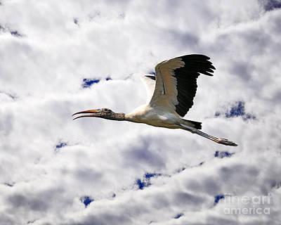Photograph - Sky Stork by Al Powell Photography USA