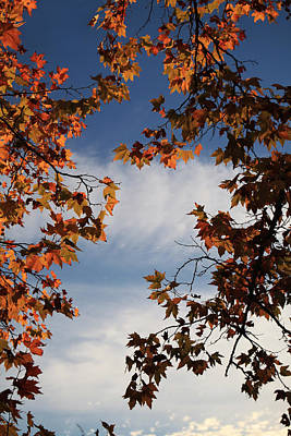 Fall Leaves Photograph - Skyward by Laurie Search