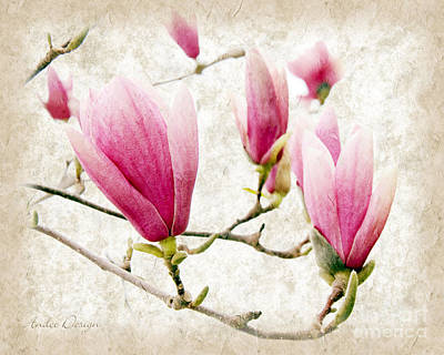 Flowers Photograph - Skyward Magnolia Painterly 3 by Andee Design