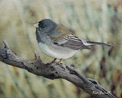 England Artist Painting - Slate-colored Junco by Ken Everett