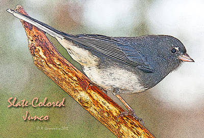 Print featuring the photograph Slate-colored Junco Poster Image by A Gurmankin