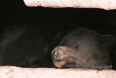 Lauren Photograph - Sleeping Bear by Nancy TeWinkel Lauren