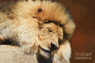 Sleeping Beast Print by Darren Fisher