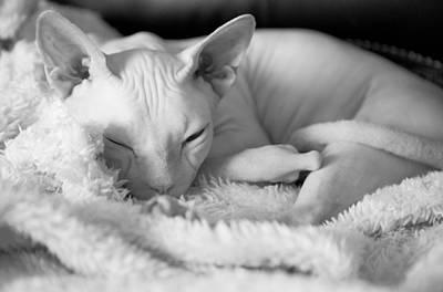 Sleeping Beauty Print by Zina Zinchik