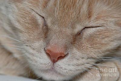 Sleeping Cat Face Closeup Print by Amy Cicconi