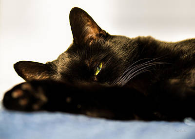 Cat Photograph - Sleeping With One Eye Open by Bob Orsillo