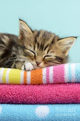 Sleeping Digital Art - Sleepy Kitten by Greg Cuddiford