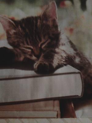 Screen Doors Photograph - Sleepy Student by Keyana Neal