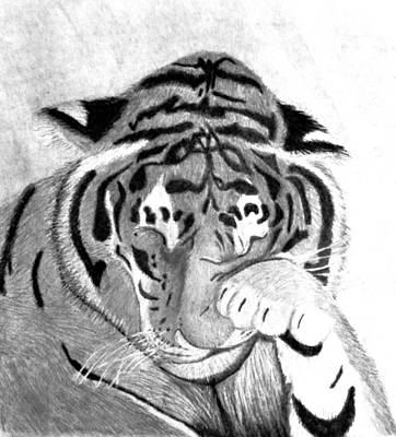 Bear Paw Drawing - Sleepy Tiger by Michelle McPhillips