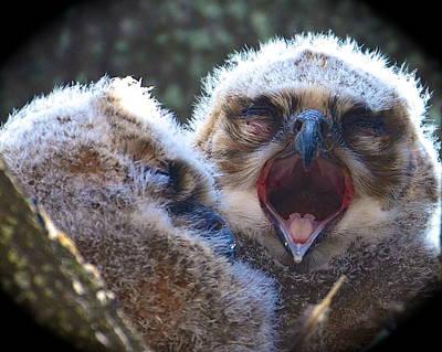 Owl Photograph - Sleepy Time by AnnaJo Vahle