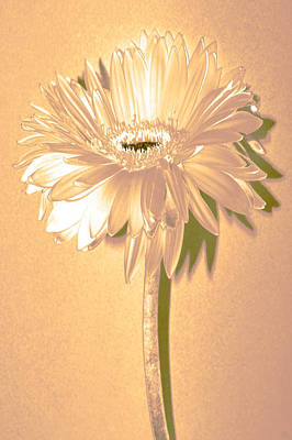 Sunburst Floral Still Life Photograph - Slice Of Lime by Sherry Allen