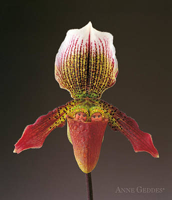 Slipper Orchid Print by Anne Geddes