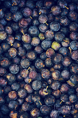 Fruit Photograph - Sloes by Tim Gainey