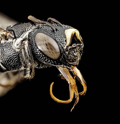 Small Carpenter Bee Print by Us Geological Survey