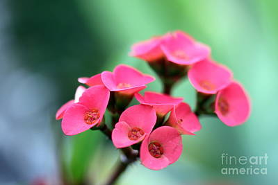 Small Red Flower Print by Henrik Lehnerer