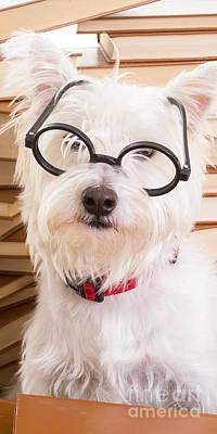 Smart Doggie Phone Case Print by Edward Fielding