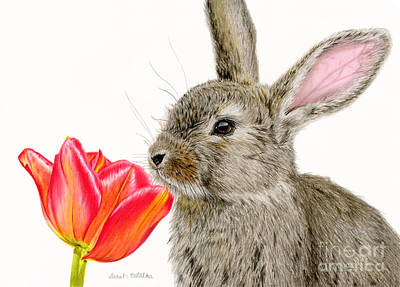 Rabbit Drawing - Smells Like Spring by Sarah Batalka