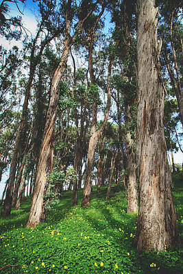 Eucalyptus Tree Photograph - Smiles And Laughter by Laurie Search