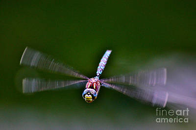 Smiley Face Dragonfly Coming At You Original by Janice Rae Pariza