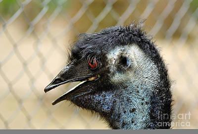 Hair Photograph - Smiley Face Emu by Kaye Menner