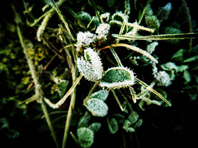 Winter Photograph - Smiling In The Frost by Zinvolle Art