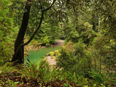 Smith River Redwoods Print by Leland D Howard