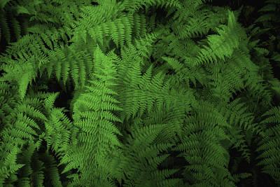 Smoky Mountain Ferns Print by Joel Corley