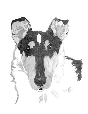 Smooth Collie Headstudy Original by Virginia Cleary
