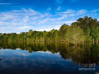 Cypress Stump Photograph - Smooth Reflection by Ken Frischkorn