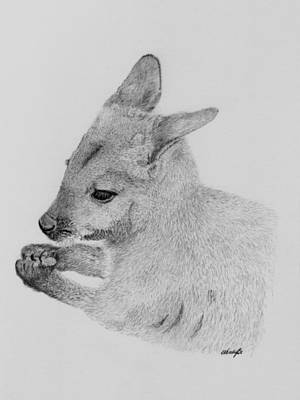Kangaroo Drawing - Snackin Wallaby by Wendy Brunell