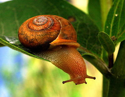 Snail Away Print by Betsy Straley