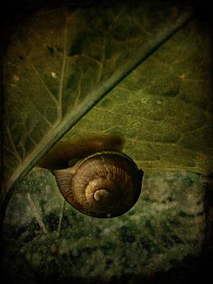 Snail Camp Print by Barbara Orenya