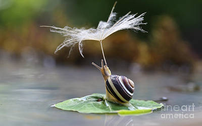 Nature Photograph - Snail With A Parasol by Slava Mishchenko