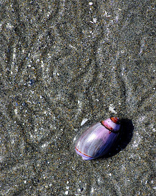 British Columbia Photograph - Snail's Pace by Lisa Phillips