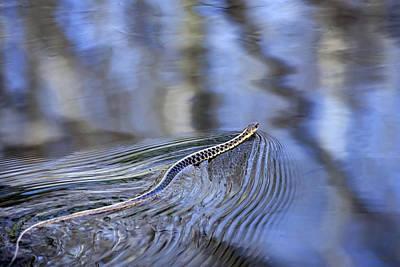 Slithering Snake Print by Christina Rollo