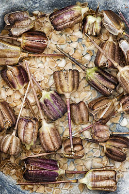 Meleagris Photograph - Snakes Head Fritillary Flower Seeds Pattern by Tim Gainey