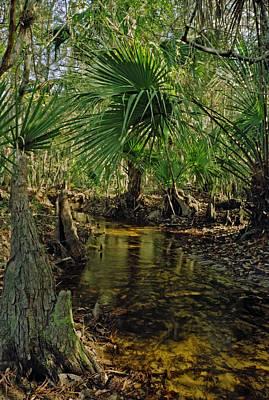 Snell Creek. Osceola County Florida Print by Chris  Kusik