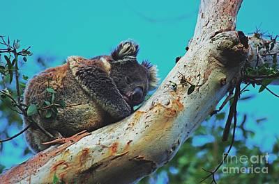 Snooze Time For A Koala  Original by Blair Stuart