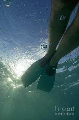 Snorkeller Legs With Flippers Underwater Print by Sami Sarkis