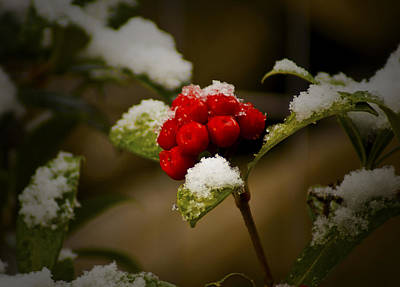 Snow And Berries Print by Ron Roberts