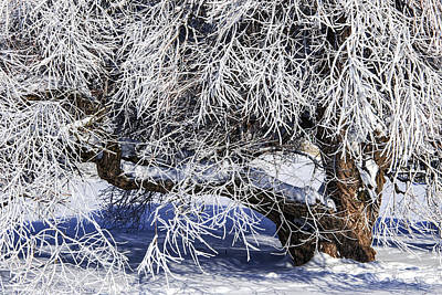 Snow And Ice Covered Tree Print by Randall Nyhof