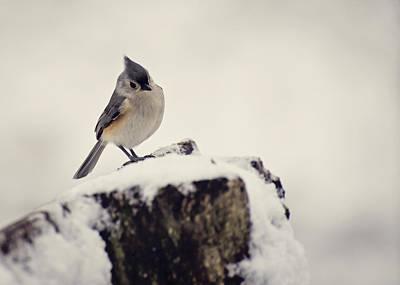 Tufted Titmouse Photograph - Snow Bird by Heather Applegate