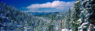Pine Trees Photograph - Snow Covered Pine Trees In A Forest by Panoramic Images