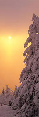 Cold Temperature Photograph - Snow Covered Tree In Winter At Sunset by Panoramic Images