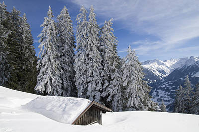 Snow Covered Trees And Mountains In Beautiful Winter Landscape Print by Matthias Hauser
