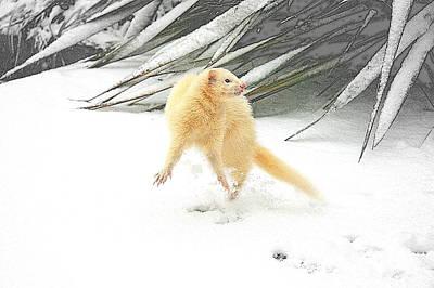 Snow Dance Print by Nigel Espley